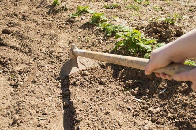 удаление корней растений
